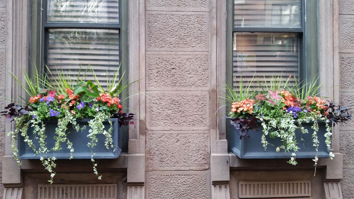 Windowbox-summer-55-e-76