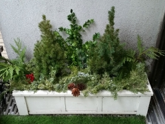 Window-boxes-winter-display