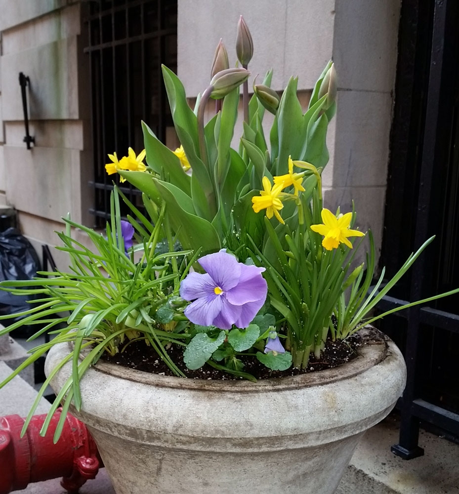 Container-entrance-spring