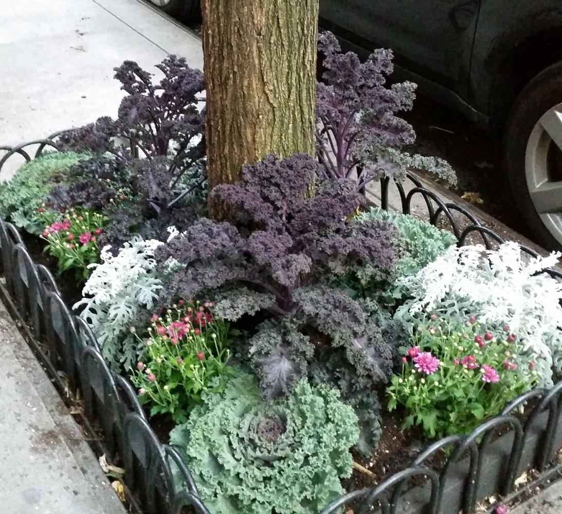 Tree-pit-autumn-cabbage