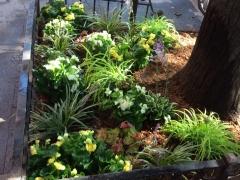 Tree-pits-summer-shade-Brklyn
