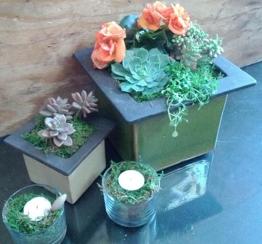Floral_succulent_moss_mix