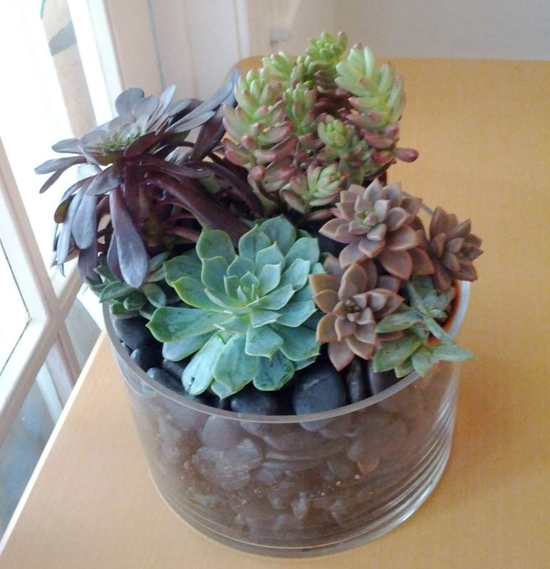 Succulents-and-Riverstones1