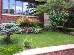 Frontyard-Terry2