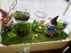 Indoor-window-display-epices