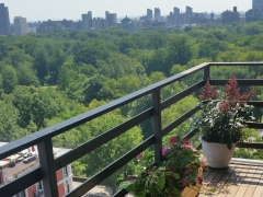 Terraces & Rooftops 80-good