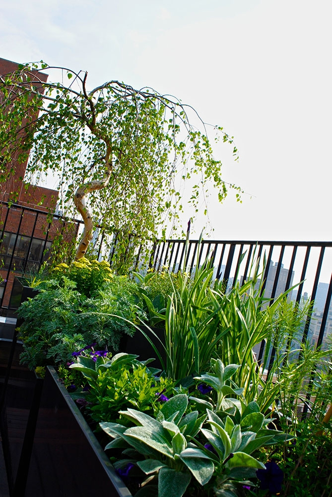 TerracesRooftops07