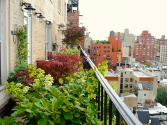 TerracesRooftops74 (1)