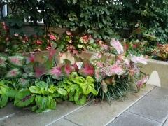 Courtyard-corner-summer